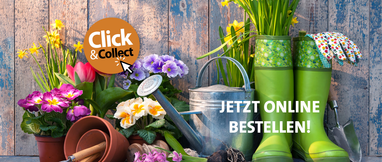 Gauster Click&Collect